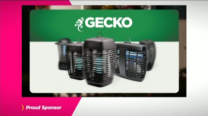 Gecko Insect Killers
