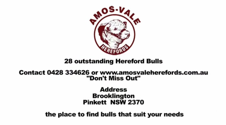 Amos-Vale Herefords