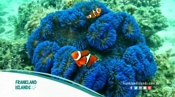 Frankland Islands Reef Cruises