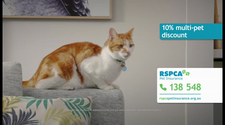 RSPCA Pet Insurance