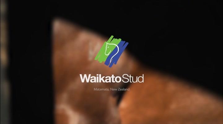 Waikato Stud