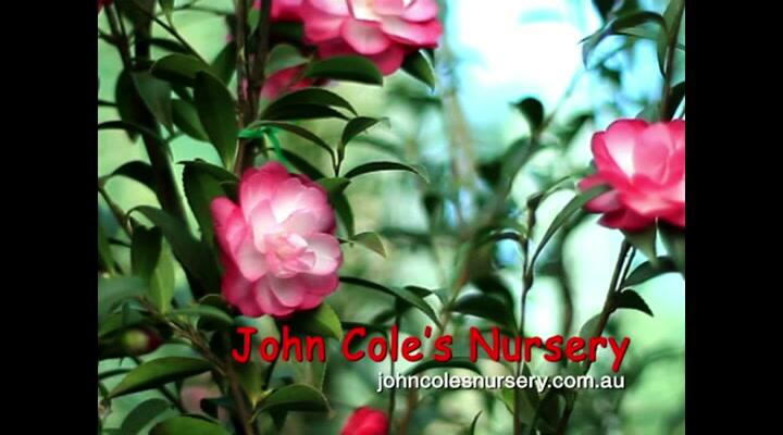 John Cole's Nursery