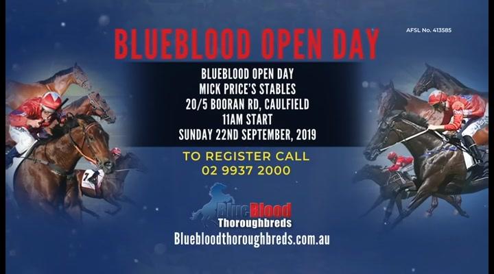 Blueblood Thoroughbreds