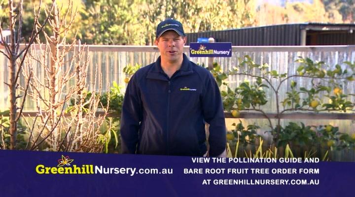 Greenhill Nursery
